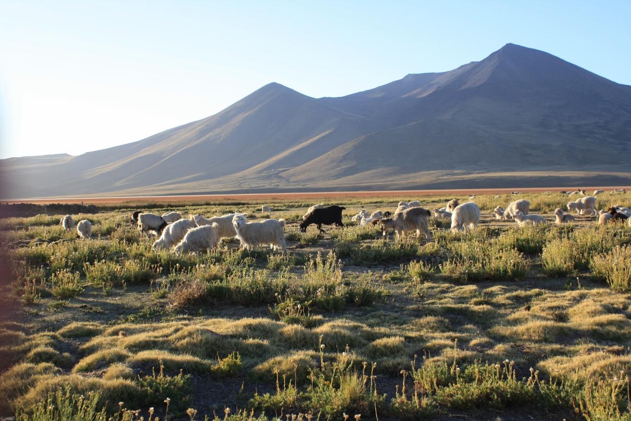Cerro Wayle