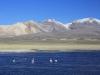 Acotango and Lago Chungara