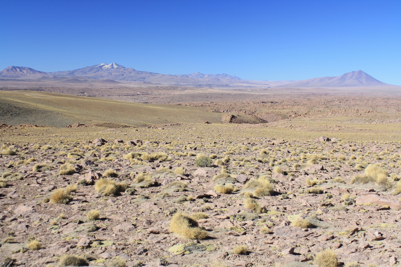 View near Paso Salar Capina